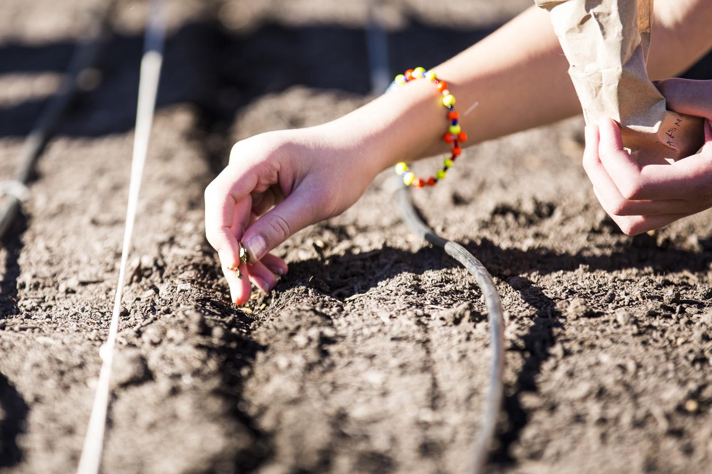 Farmer Planting Seeds | Car Interior Design