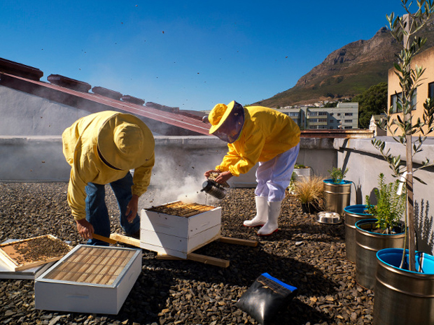 Cape Town Urban Beekeeping